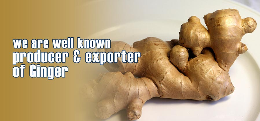 Well known producer & exporter of Ginger
